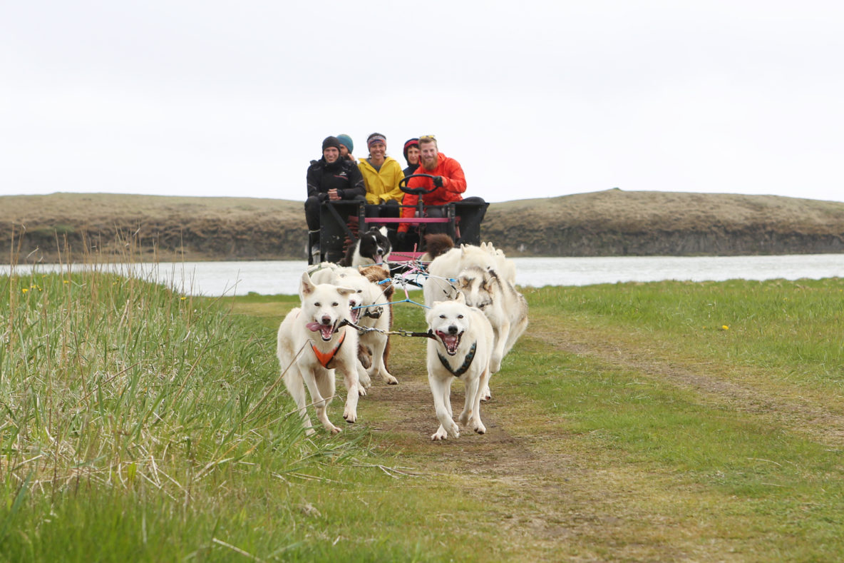 dry land mushing, dogsledding with friends