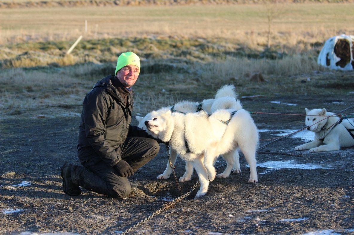 siggi dogs husky