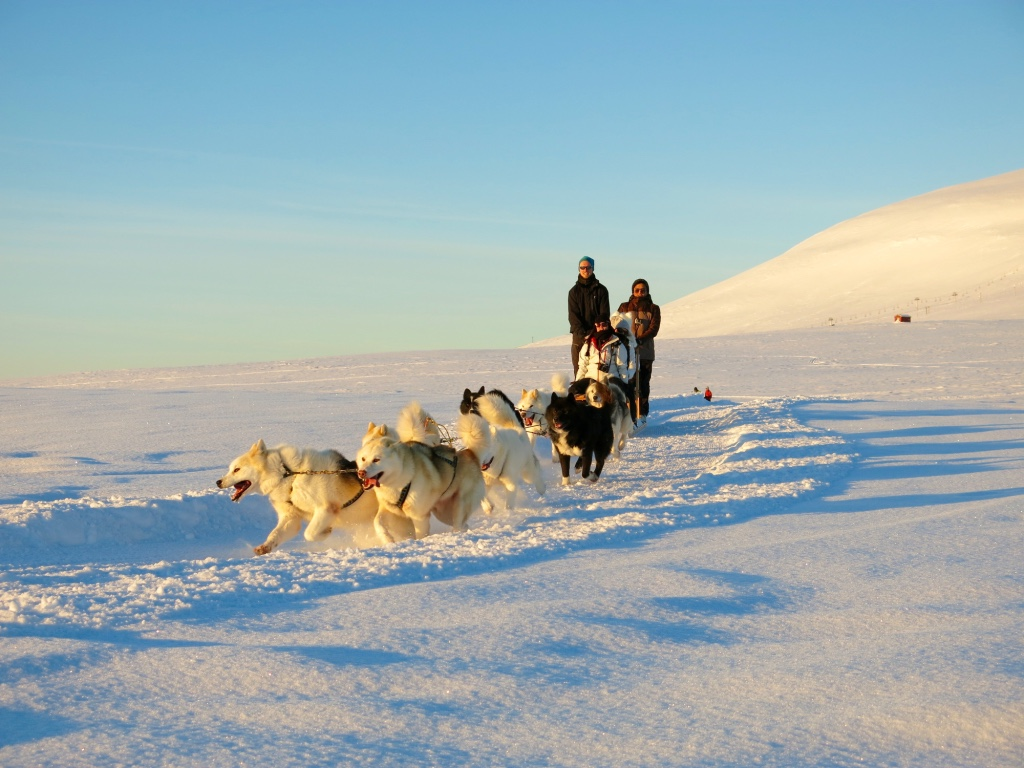 transfer Husky dog ride on snow husky dog ride tour