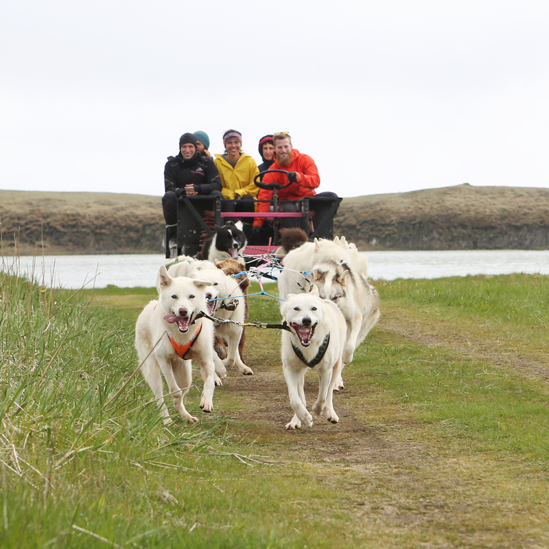 dogsledding self driver tour