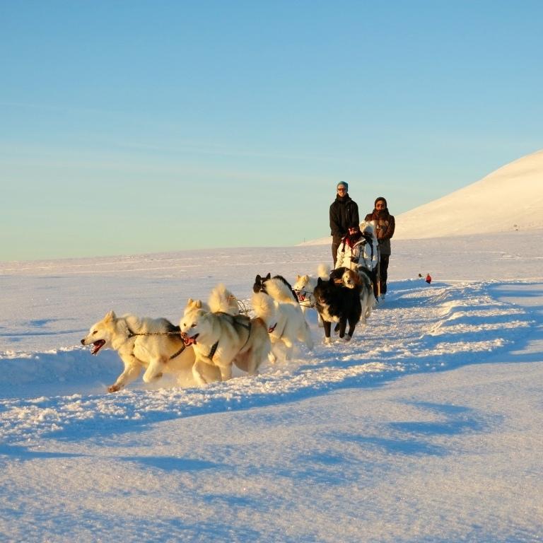 dogsledding winter snow