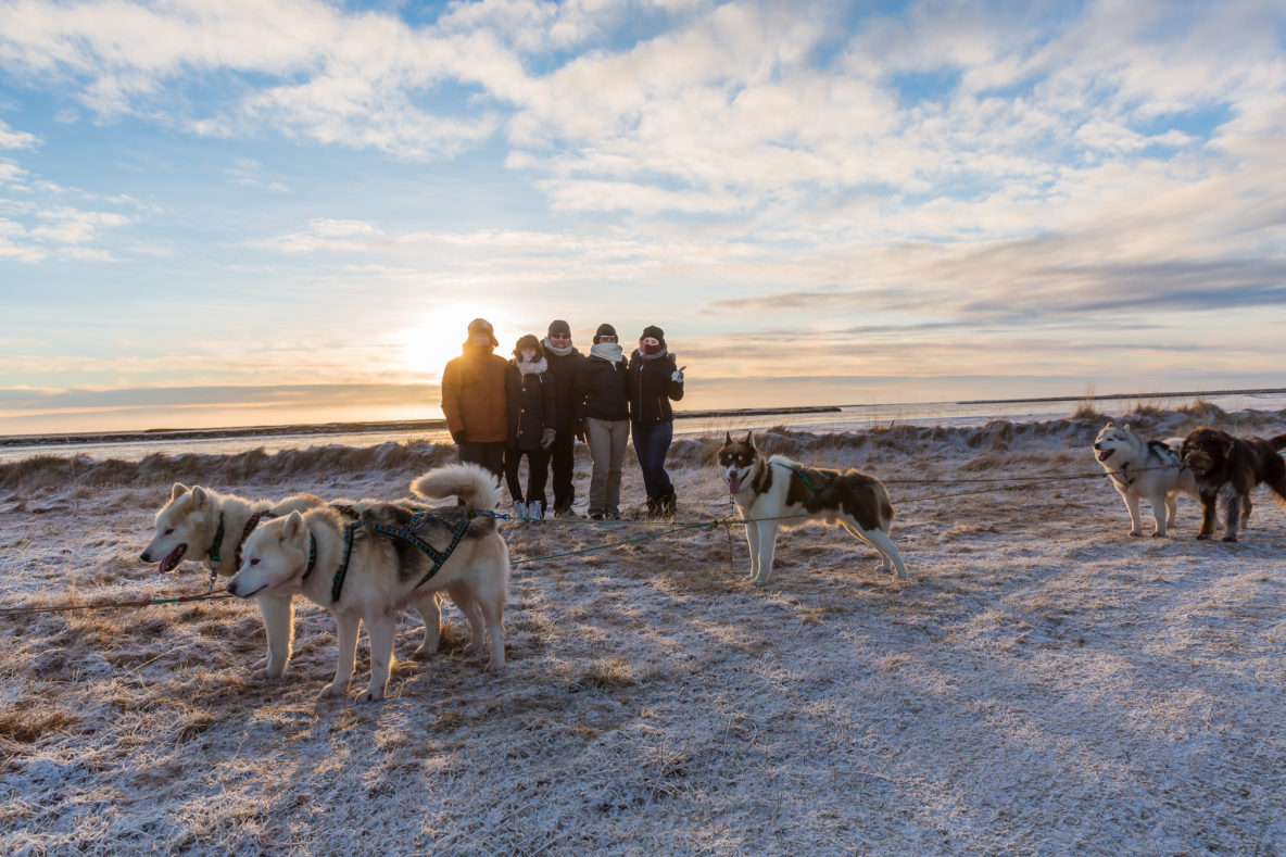 dogsledding tour with transfer stress free tour by dogsledding