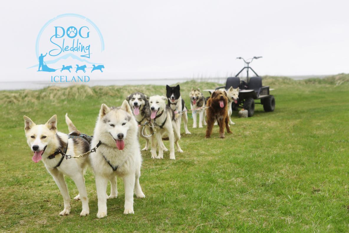 dog sledding iceland dogsledding sled dogs dry land logo