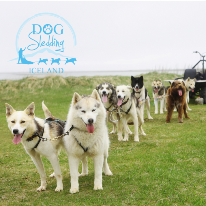 all tours sleddogs cart dry land dogsledding