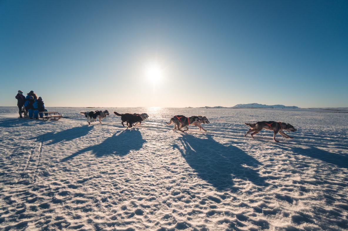dogs runnion snow iceland